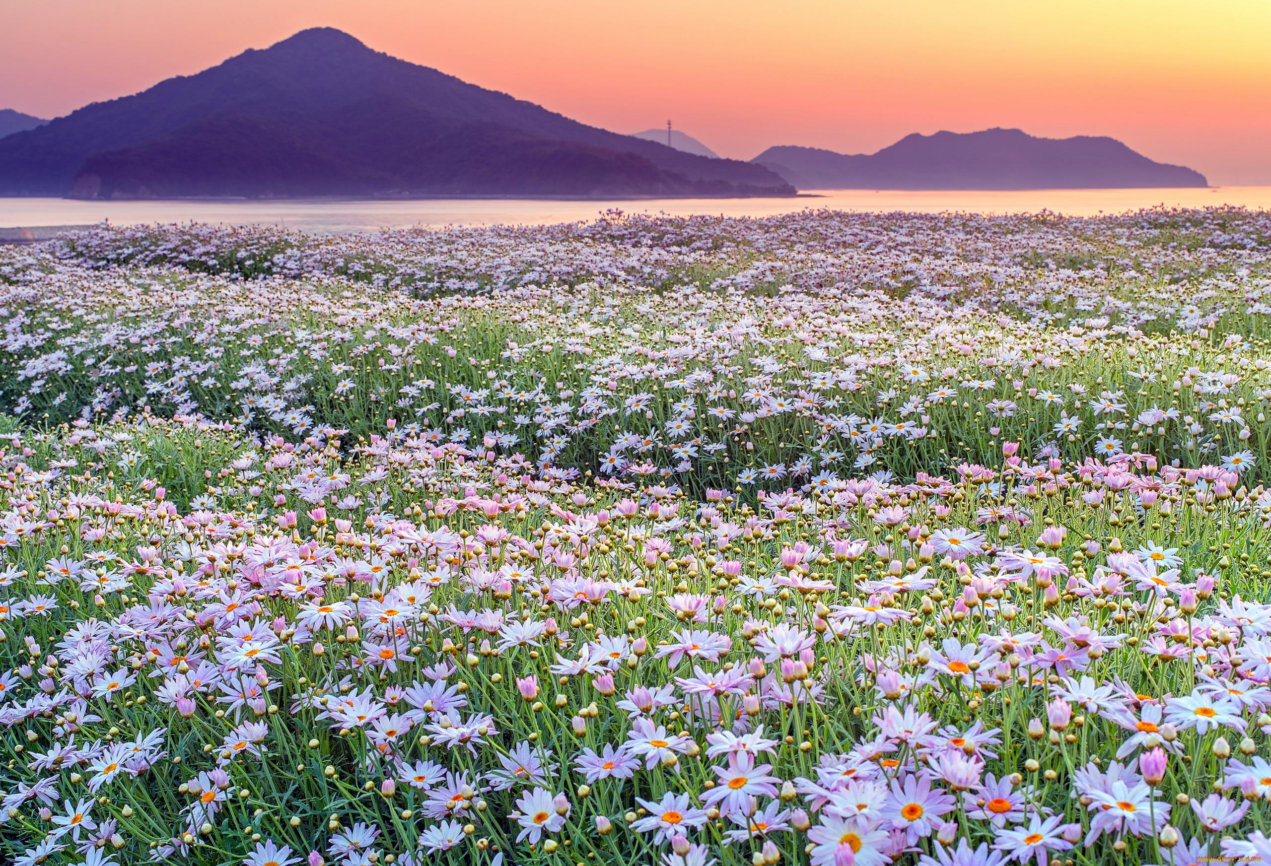 сорта фото цветущих полей и лугов если быть